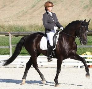 Diamant 424-pony connemara (4)